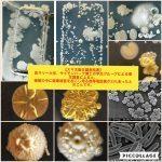 抗菌コート剤誕生